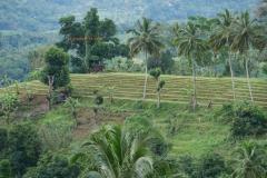 Murapola_Kolambissa_Jan2017_landscape_011