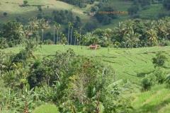 Murapola_Kolambissa_Jan2017_landscape_018