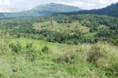 Murapola_Kolambissa_Jan2017_landscape_023